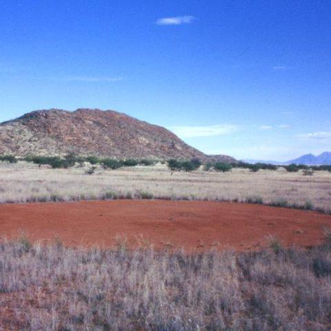 Namibian Fairy Circles