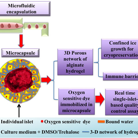 Pancreatic Islet Encapsulation